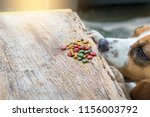 a dog is trying to eat dog food ... | Shutterstock . vector #1156003792