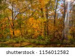 panorama of fall foliage  ...   Shutterstock . vector #1156012582