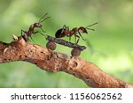 red ant riding on her skateboard | Shutterstock . vector #1156062562