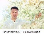 olive trees. handsome man... | Shutterstock . vector #1156068055