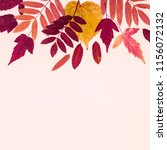 multicolored set autumn leaves... | Shutterstock . vector #1156072132