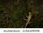 a beautiful yellow lizard... | Shutterstock . vector #1156109098
