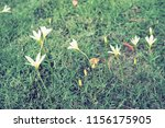 flowers used for decorating the ... | Shutterstock . vector #1156175905