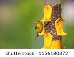 Small photo of Tiny American Gold flinch bird on feeder