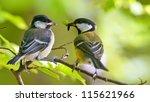 Great Tit Feeding Younger Bird