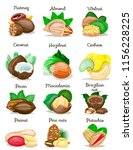 set of nuts poster in shell... | Shutterstock .eps vector #1156228225