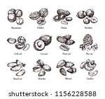 hand drawn nuts and seeds.... | Shutterstock .eps vector #1156228588