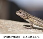 lizard on the rock  | Shutterstock . vector #1156351378