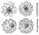 dahlias set. botanical vintage... | Shutterstock .eps vector #1156390258