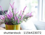 light from the window and decor ...   Shutterstock . vector #1156423072