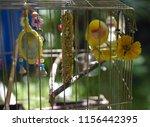 shallow depth of field of a... | Shutterstock . vector #1156442395