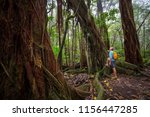 hiker on the trail in green... | Shutterstock . vector #1156447285