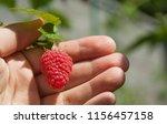 growing juicy red raspberries... | Shutterstock . vector #1156457158