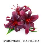 Three Red Lily Isolated On...