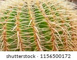 closeup of cactus. texture of... | Shutterstock . vector #1156500172