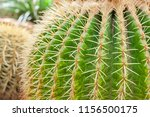 closeup of cactus. texture of... | Shutterstock . vector #1156500175