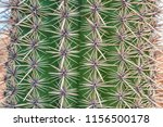 closeup of cactus. texture of... | Shutterstock . vector #1156500178