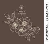 camellia sasanqua  flowering... | Shutterstock .eps vector #1156562995