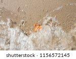 Small photo of Dry tree leaf on the beach sand. On the seashore. Autumn