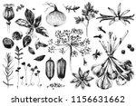 fresh organic hand drawn herbs... | Shutterstock .eps vector #1156631662