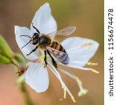 A Macro Shot Of A Honey Bee...