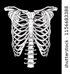 human ribcage hand drawn line... | Shutterstock .eps vector #1156683388