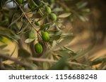green olives tree. greek olive... | Shutterstock . vector #1156688248