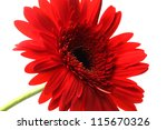 flower close-up - stock photo