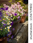 beautiful  summer garden with... | Shutterstock . vector #1156719802