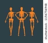 human skeleton standing and... | Shutterstock .eps vector #1156756948