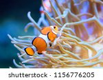 tropical and coral sea fish.... | Shutterstock . vector #1156776205