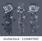 graphic detailed black and... | Shutterstock .eps vector #1156847002