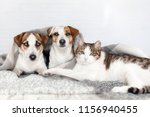 Stock photo dog and cat together dog hugs a cat under the rug at home friendship of pets 1156940455