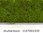 the background of green... | Shutterstock . vector #1157001535