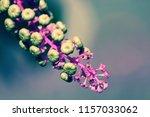 botanical flower  beautiful and ... | Shutterstock . vector #1157033062