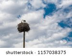 lonely stork waiting in the... | Shutterstock . vector #1157038375