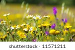 Wild Flowers In The Field Of...