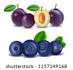 set of purple plums and... | Shutterstock .eps vector #1157149168