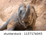 Elephant Playing The Sand