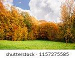 beautiful birch grove on sunny... | Shutterstock . vector #1157275585
