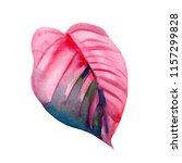 pink tropical leaf on isolated... | Shutterstock . vector #1157299828
