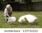 Small Flock Of White Geese...