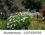 beautiful flowerbed of... | Shutterstock . vector #1157329705