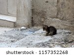 Stock photo little nice kitten sitting near abandoned house little kitten needed to take care of him one 1157352268