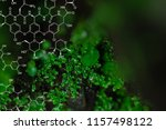 plants background with...   Shutterstock . vector #1157498122