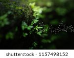 plants background with...   Shutterstock . vector #1157498152