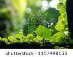 plants background with...   Shutterstock . vector #1157498155