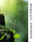 plants background with... | Shutterstock . vector #1157498158