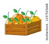 delicious oranges fruits inside ... | Shutterstock .eps vector #1157525668
