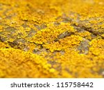 Macro Shot Of Lichen
